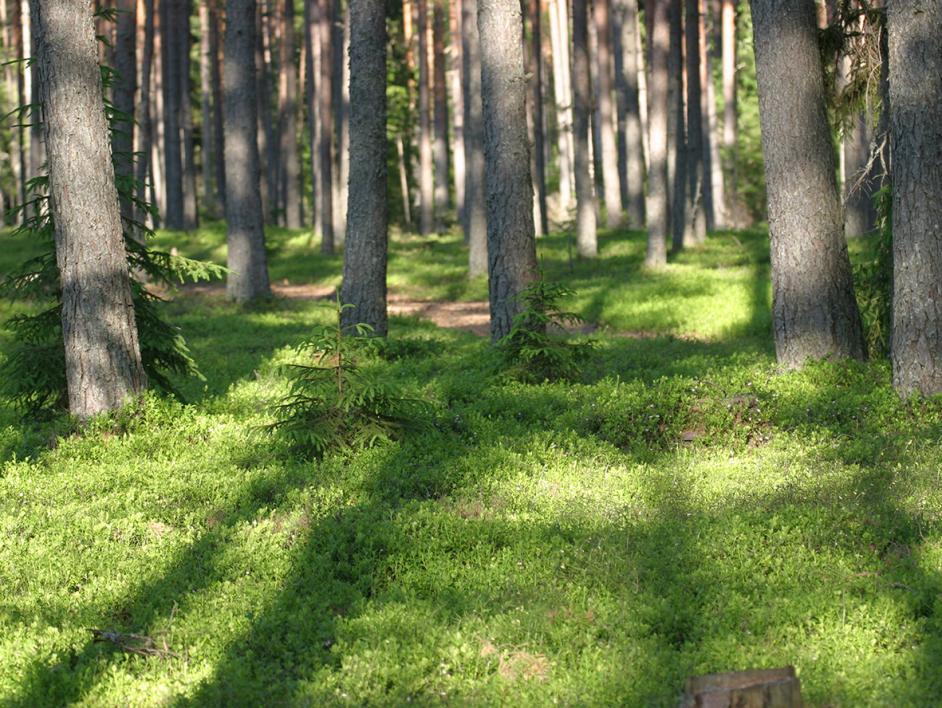 Metsän Osto